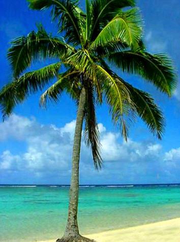 Pohon kelapa yang disebut juga dengan pohon nyiur biasanya tumbuh pada